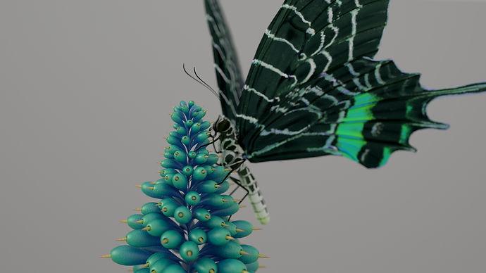 Butterfly_001_RS_003.JPG