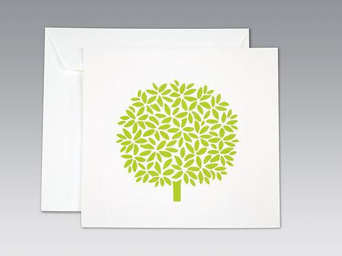 BAY TREE (8 pack)
