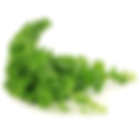 curledkale.png