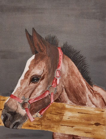 """Brooke Schley 'Young Filly' 17"""" x 22"""" acrylic on canvas"""