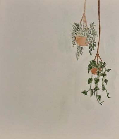 "Navi Macknak 'Hanging Plants 3' 8"" x 10"""