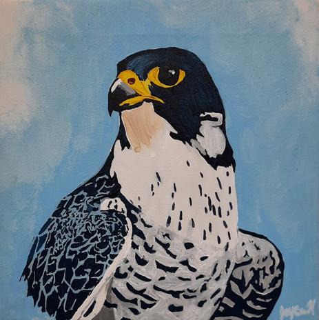 "Jaycee Hodson 'Peregrine Falcon' 12"" x 12"" acrylic on canvas"