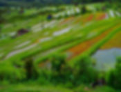 Terraced rice paddies of Bali