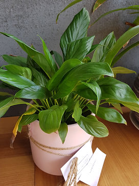 Indoor plants: our link with nature during lockdown