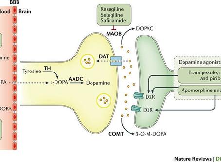 Drug treatments in Parkinson's Disease