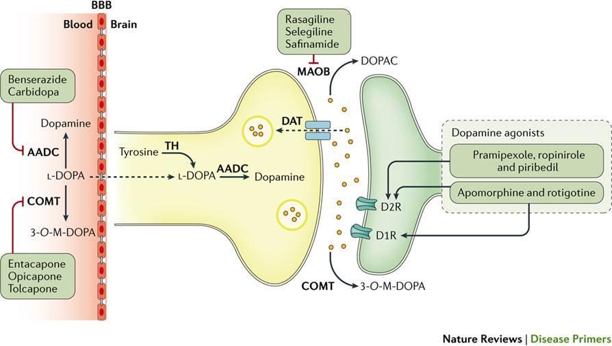 Parkinsons Disease Progression >> Drug treatments in Parkinson's Disease