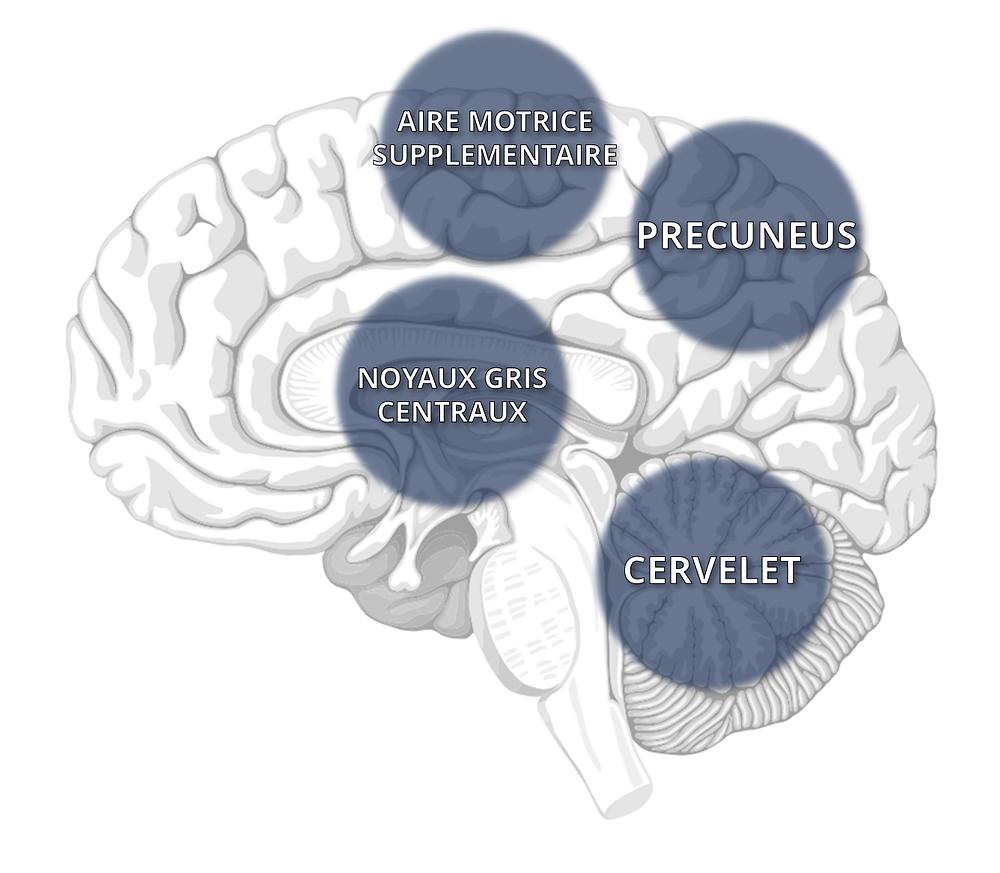 Les aires cérébrales impliquées dans le freezing dans la maladie de Parkinson