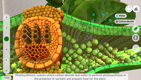 O Level Biology: Transport in Plants / Reproduction in Plants [HBL Friendly]