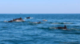 Морская прогулка Сочи