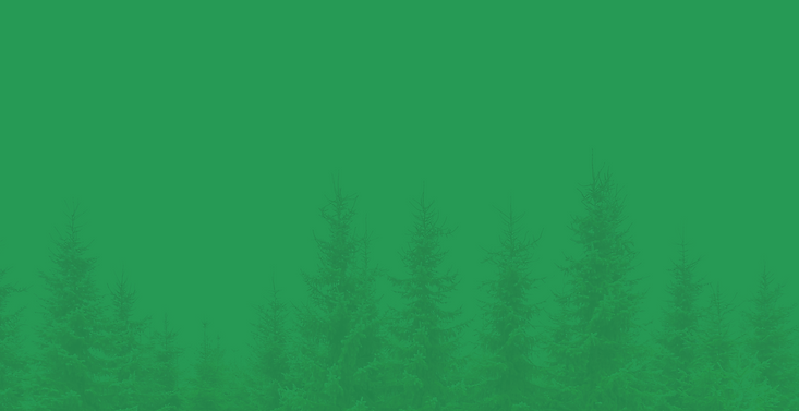 PineTree_background-28.png