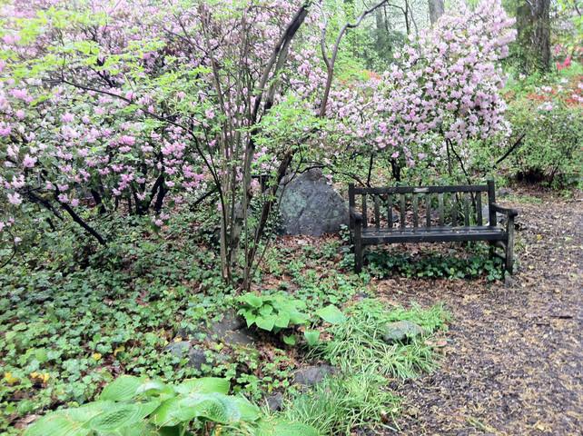 woodland scent