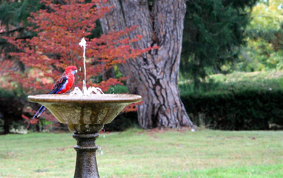 fountain church Canberra parrot bird