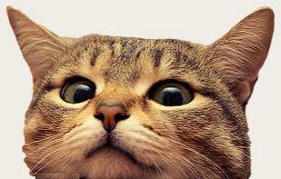 cat15b.jpg