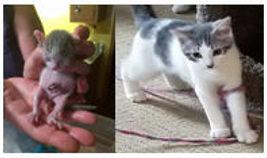 Foster cat Groot