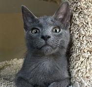 july-3 cats.jpg