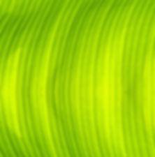 Green Banana Leaf Texture