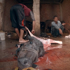 Indian slaughterhouse