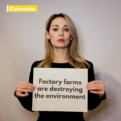 Divest from Factory Farming Video