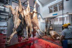 7 motivos por los que nadie quiere trabajar en la indústria de la carne