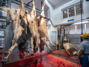 7 motivos por que ninguém quer trabalhar na indústria da carne