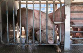 องค์กรพัฒนาเอกชนระดับโลก ยื่นคำร้องขอให้ธนาคารหยุดการระดมทุนเพื่ออุตสาหกรรมปศุสัตว์