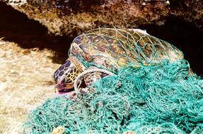 El 85% de la basura en algunas partes de los océanos son artes de pesca