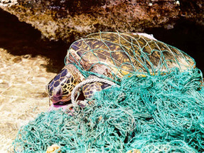 85% of the rubbish at some parts of the oceans is fishing gear