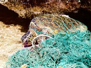 85% do lixo em algumas partes dos oceanos são equipamentos de pesca