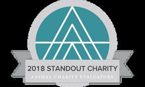 Sinergia Animal fue reconocida como una de las ONGs de protección animal más eficaces del mundo por