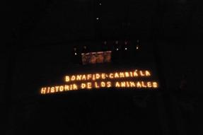 Con velas, Sinergia Animal realiza acto de luto en Plaza de Mayo