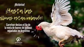 Carrefour es el primer supermercado argentino en adoptar política de huevos libres de jaulas