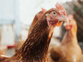 Harper Juice Bar announces cage-free egg policy in Argentina
