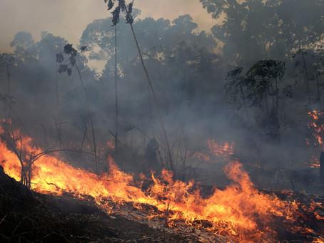Terras indígenas têm o maior número de incêndios desde 2011
