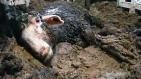 สัตว์ว่า 200,000 ชีวิตติดอยู่ในเรือส่งสินค้ากลางคลองสุเอซ