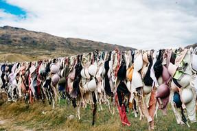 งานวิจัยเผยการบริโภคนมวัวเพิ่มอัตราเสี่ยงมะเร็งเต้านมถึง 80%