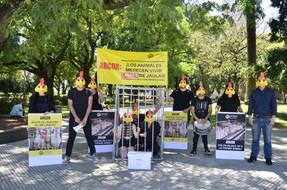 En protesta en la Ciudad de Buenos Aires, animalistas expusieron práctica cruel con animales en la c