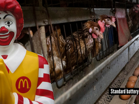 5 Reasons that prove Mcdonald's is not right about our campaign