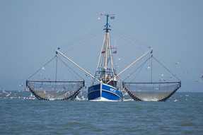 Laporan Greenpeace: 85% Sampah di Sebagian Titik Sampah di Laut adalah Sampah Jaring