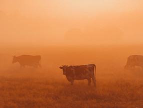 Sinergia Animal joins climate coalition to transform the food system