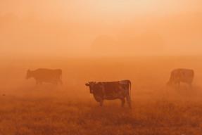 ซิเนอร์เจีย แอนิมอลจับมือองค์กรระดับโลก มุ่งปฎิรูปการผลิตอาหาร รับมือวิกฤตโลกร้อน