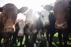ONU: dieta vegana es necesaria para enfrentar el cambio climático