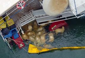 Kapal Kargo yang Mengangkut 14.000 Domba Hidup, Terbalik di Perairan Lepas Pantai Romania