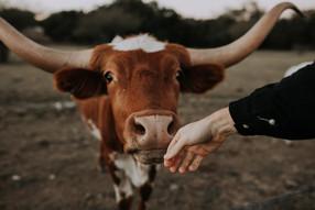No somos más importantes que los animales, dice profesora de Harvard