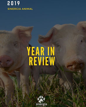 Sinergia Animal 2019 - Year in Review.jp