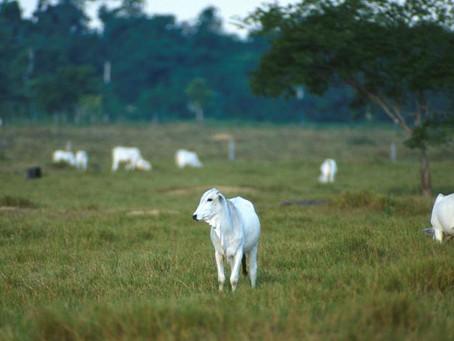 17% das exportações de carne da Amazônia e Cerrado para a UE vêm de desmatamento ilegal
