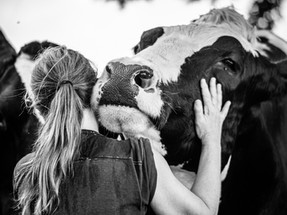 6 things that would happen if the world went vegan
