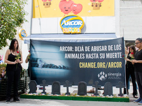Activists exhibit 'The Cemetery of Arcor' to end the worst practices in the egg industry