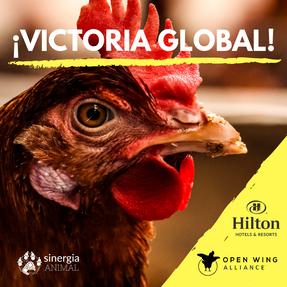 ¡Victoria Global: Hilton asumió el compromiso libre de jaulas!