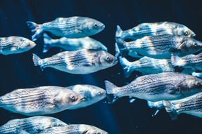 7 fatos que demuestran que los peces son seres sensibles e inteligentes