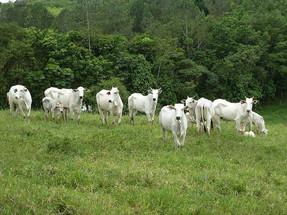 4 impactos ambientales del consumo de productos animales